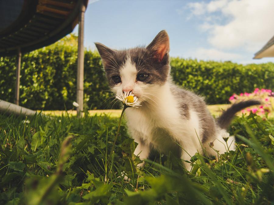 Cómo introducir un nuevo gato en la familia