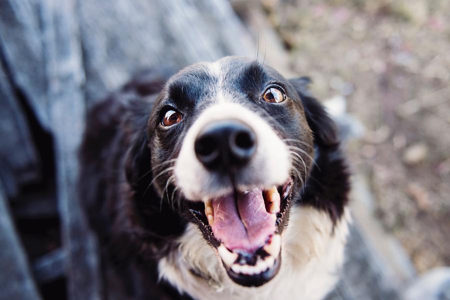 5 consejos para hacer feliz a tu perro