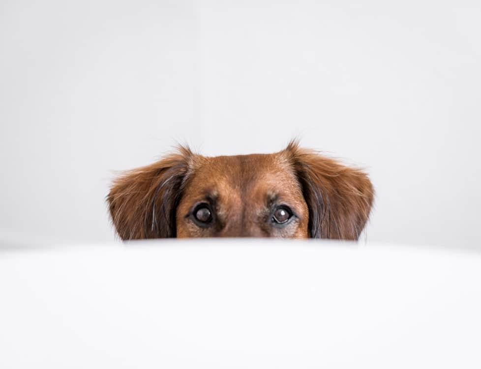 Mago sorprende a perros de un refugio con sus trucos, ¡Sus reacciones son adorables!
